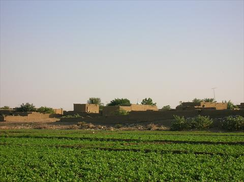 Field near the Nile