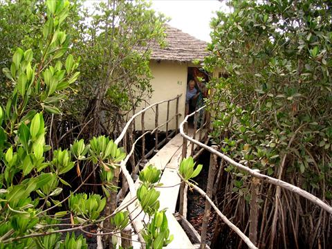 Hut in the mangroves