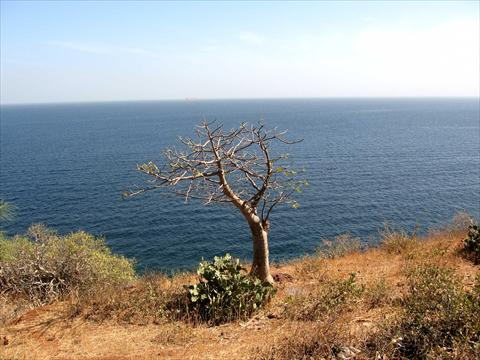 A tree at the cliff