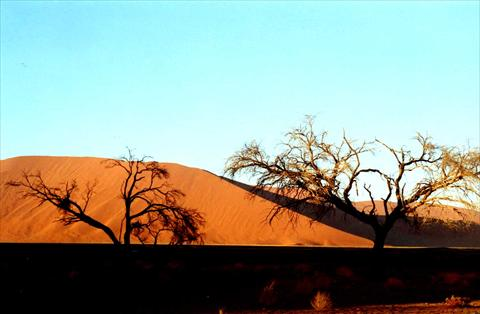 Trees and dunes