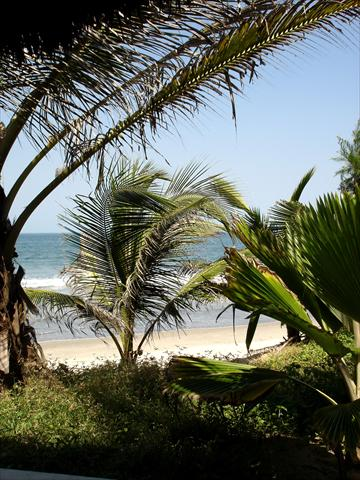 Palmtrees and beach