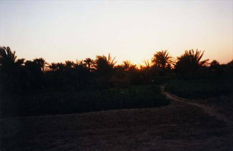 Evening in the oasis