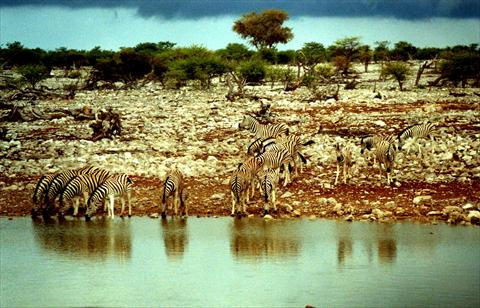 Meeting at the waterhole