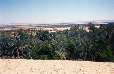 View over the oasis